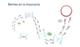 Berries en la Araucania