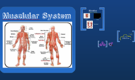 Skeletal System #4