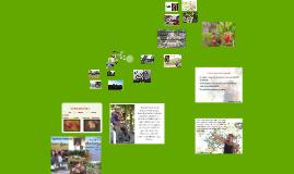 Ecologia do Pantanal do Araguaia na perspectiva de sua gente