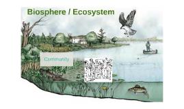Biosphere / Planet