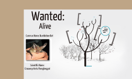 Copy of Endangered Species Project