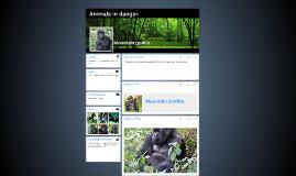 Mountain gorilla.