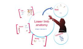 lower limb anatomy : hip, knee , ankle , foot