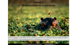 Chapter 3 Lesson 2 Relationships is Ecosystems