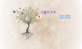 식물의 구조 20929정선아,20933허민영
