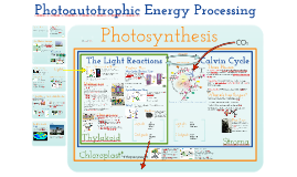 Copy of AP Bio- Energy 4:  Photoautotrophic Nutrition