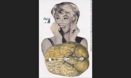Género, sexo y cerebro