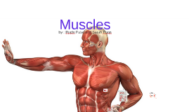 Copy of Muscles