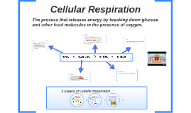Simple Cellular Respiration