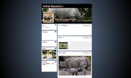 Indisk Næsehorn