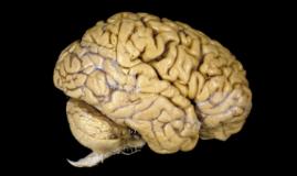 neuroscience behavior