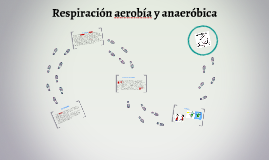 Copy of Respiracion aerobea y anaerobica