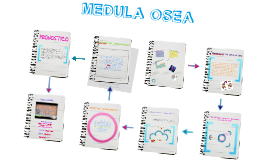 Copy of MEDULA OSEA