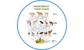 RAINFOREST FOOD CHAIN by Lanz Chin on Prezi