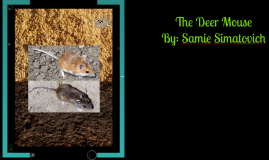 The deer mouse is a prime example of Natural Selection.