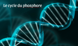Le cycle du phosphore