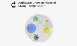 Anthozoa: Characteristics of Living Things
