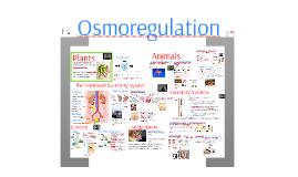 Osmoregulation and Excretory System