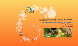 Exotic Invasive Species Reserch