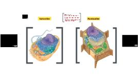 Dyreceller og planteceller