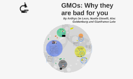 GMOs: Why they are bad for you