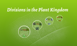 Divisions in the Plant Kingdom