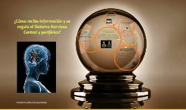 ¿Cómo recibe información y se regula el Sistema Nervioso Cen