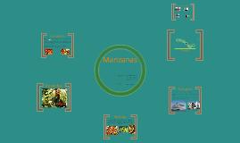 Copy of Post Cosecha. Manzanas