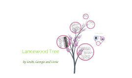 Copy of Lancewood