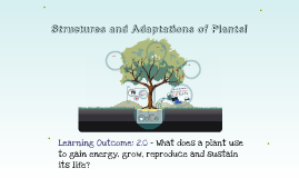 Grade 7 Science - Structure and Adaptations of Plants