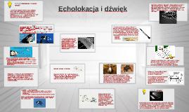 Orientacja w przestrzeni- ECHOLOKACJA