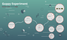Guppy Experiment