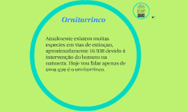Ornitorriinco
