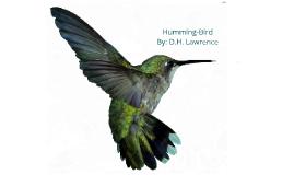 Copy of The Hummingbird