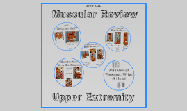 Copy of ATTR 210L - UE Muscular Review
