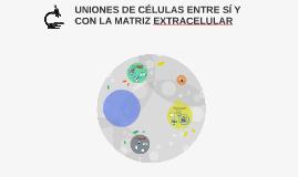 UNIONES DE CÉLULAS ENTRE SÍ Y CON LA MATRIZ EXTRACELULAR