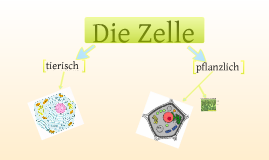 copy of die zelle by cornelia fitsch on prezi. Black Bedroom Furniture Sets. Home Design Ideas