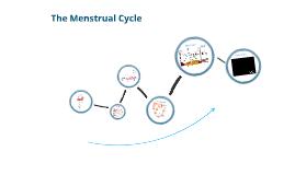 MGS The Menstrual Cycle (year 10 biology)