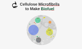 Cellulose Microfibrils to Make Biofuel