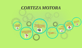 Copy of CORTEZA MOTORA