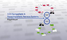 3.04 Sympathetic Parasympathetic Nervous Systems