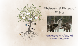 Phylogeny of Dogs