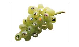 WINE PRESENTATION (EASY)