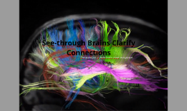 See-through Brains Clarify Connections