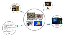Copy of Wirbellose Tiere
