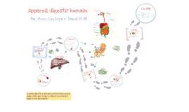 Appareil digestif humain