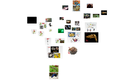 Copy of puhatestűek