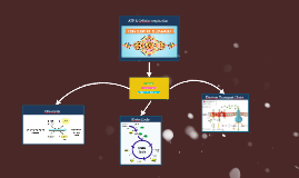 ATP & Cellular respiration
