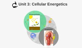 AP Bio: Cellular Energetics