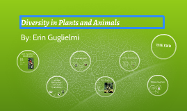 Diversity in Plants and Animals